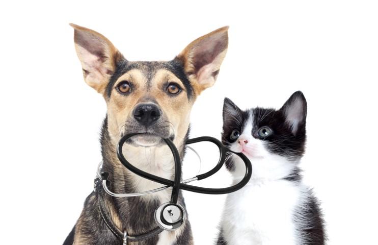 Tierheilpraktiker Ausbildung