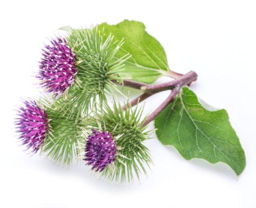 Ausbildung Kräuterheilkunde Phytotherapie Swanie Simon