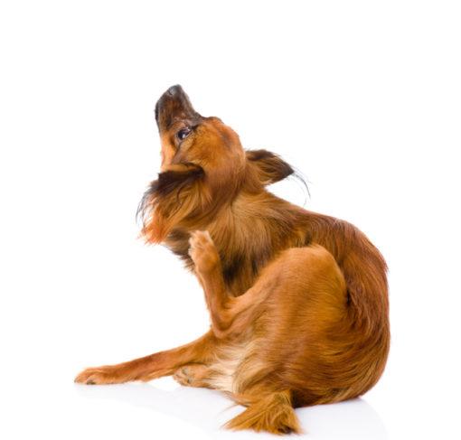 Webinar Allergien Hund