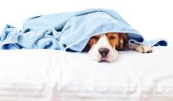 Verdauungsstörungen bei Hunden