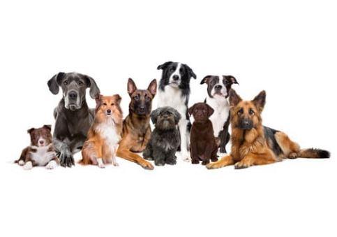 Rassedisposition Erbkrankheiten Hund
